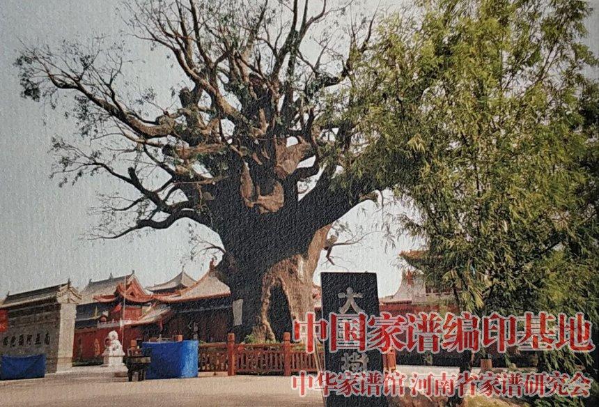 华里张村张氏族谱中的插图:洪洞县大槐树.jpg
